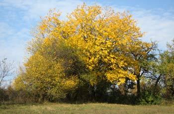 Tree. (novala)