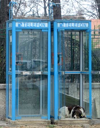 Dog in phone booth. (novala)