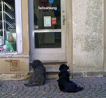 Dogs in front of door. (novala)