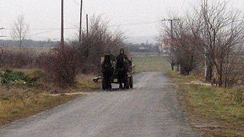 Country road and horse carriage. (novala)