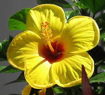 Flower. (novala)