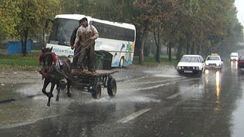 Horse carriage. (novala)