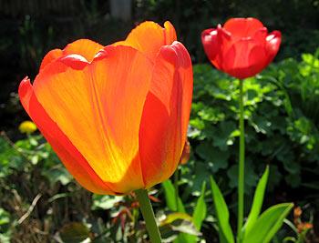 Flowers. (novala)