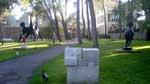 ein skulpturengarten in einem zedernhain
