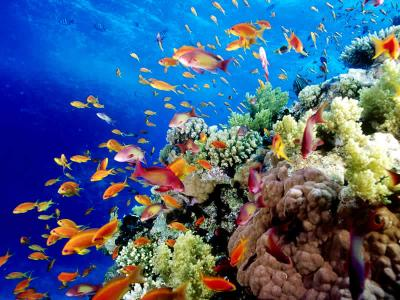 Sabbatical 14 sydney cairns mit wayoutback safari - Best place to dive the great barrier reef ...