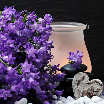Https://pixabay.com/de/photos/blumen-bl%C3%BCten-lila-bl%C3%BCten-steine-2065789/