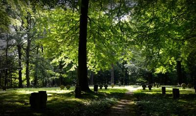 https://pixabay.com/photos/forest-commemorate-memory-crosses-1770080/