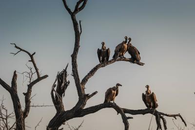 https://pixabay.com/photos/vultures-bird-watching-wildlife-1081751/
