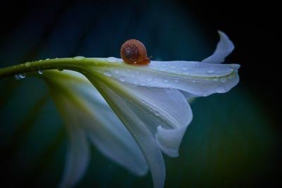 https://pixabay.com/de/photos/blumen-sommer-nat%C3%BCrliche-lily-es-3453238/