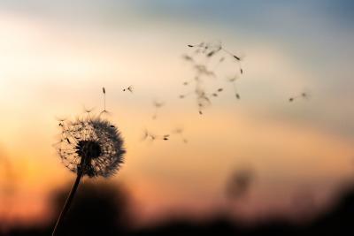https://pixabay.com/photos/dandelion-flower-plant-nature-blow-2561575/