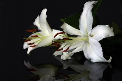 https://pixabay.com/de/photos/blume-lilie-pflanze-garten-natur-651138