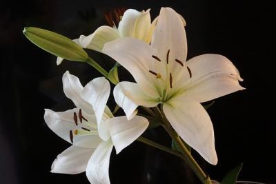 https://pixabay.com/de/photos/blume-bl%C3%BCte-lilie-pflanze-fr%C3%BChling-4006473/